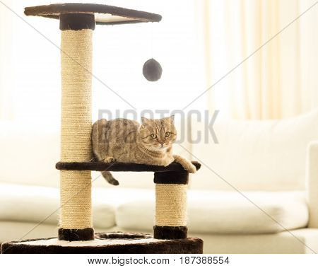 Cat sitting on a scratching post on a living room background.