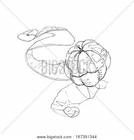 The black ink drawing of purified tangerine with a skin isolated on white background. Vector illustration. Hand-drawn sketch style.