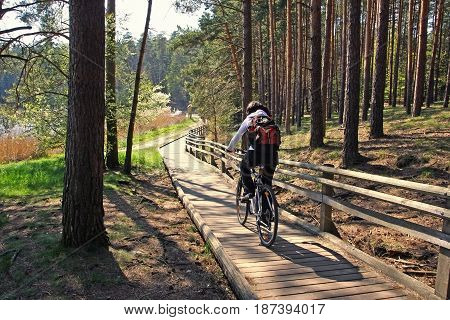 Tourist riding on bike on in pine forest