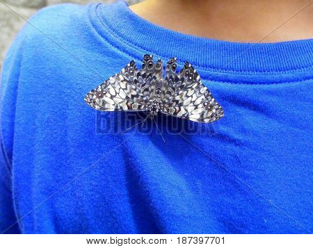 photography with scene of the butterfly sitting on t-shirt boy