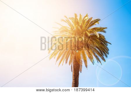 Crown Of The Tropical Palm Tree