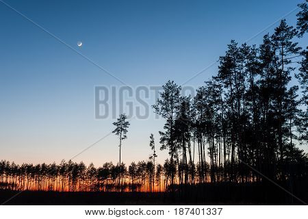 Evening Landscape With Forest And Moon