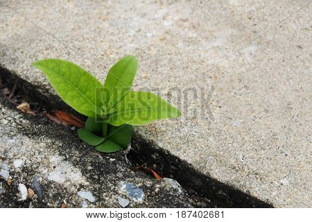 Small plant germinate Grow up on the cement floor. copy space