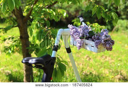lilacs in a wicker basket on the handlebars sport bike