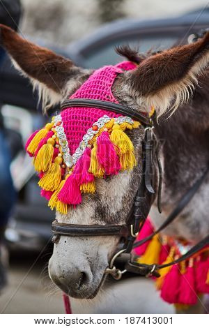 Decorated Donkey In Moscows Amusement Park Photo