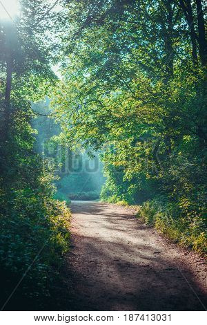 morning sun in the forest green deciduous crown thin wooden drop onto a dirt track grounding path
