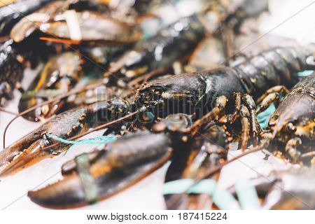 Isolated lobster on ice background on the market closeup of fresh crustacean products in restaurant useful shellfish sea food group frozen seafood after catching fishermen ocean gourmet nutrition on kitchen