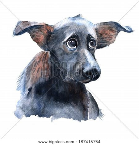 Portrait of a dog. Isolated on white background. Watercolor illustration.