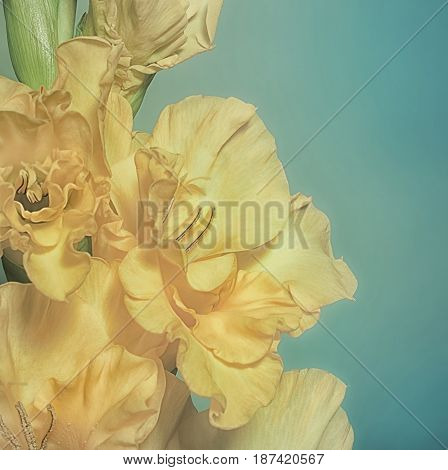 Greeting Card With Yellow Gladiolus On A Green Background