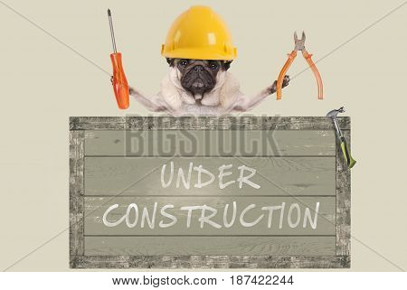 pug dog holding pliers and screwdriver behind old wooden sign with text under construction, isolated on white background