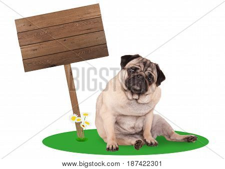 sweet cute pug puppy dog sitting down next to blank wooden board sign on pole isolated on white background
