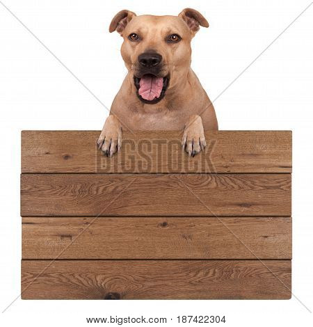 cute terrier dog hanging with paws on blank wooden promotional board sign isolated on white background