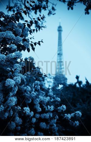 Eiffel Tower and flower in garden in Paris