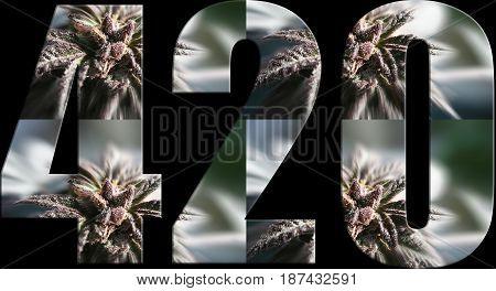 Marijuana 420 Logo With Buds Inside High Quality