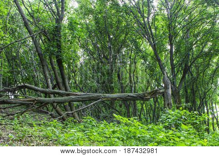 The dry tree broke down and fell in the woods