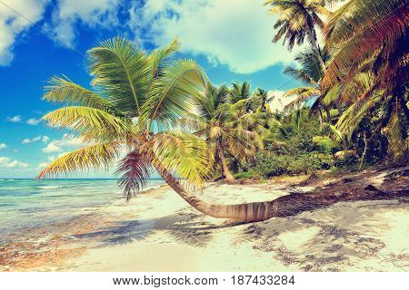 Tropical scenery. Beautiful palm beach with turquoise waters and white sand. Tropical vacations. Relaxing tropical holidays. Idyllic tropical scene. Saona Island Dominican Republic