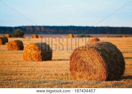 Rural Landscape Field Meadow With Hay Bales After Harvest In Sunny Evening At Sunset In Late Summer.