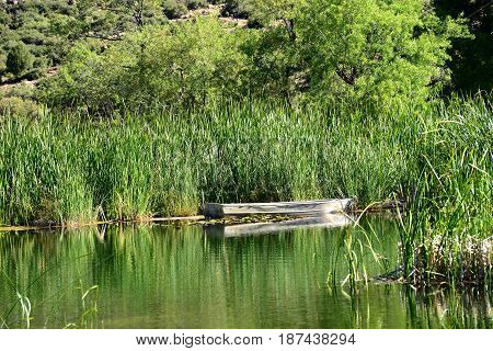Empty aluminum boat adrift on pond with reeds