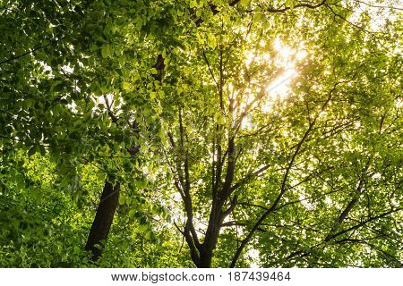 Warm Sunlight Through Green Tree Canopy Leaves Nature Outdoors Peaceful Rays