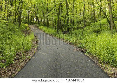 A hiking & bike trail in the woods.