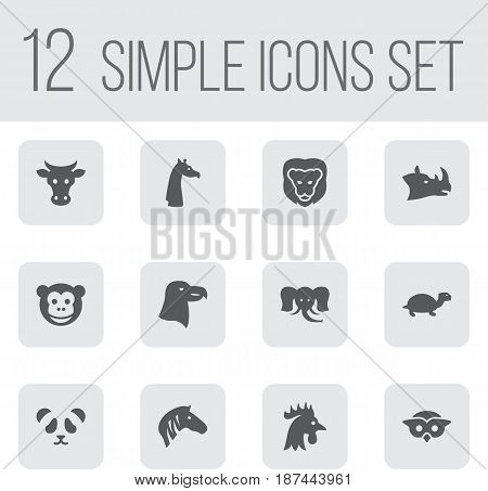 Set Of 12 Brute Icons Set.Collection Of Rhinoceros, Ape, Night Fowl And Other Elements.