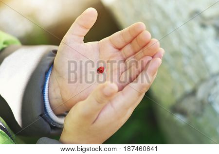 Ladybug on child hand. Conceptual care and nature scene.