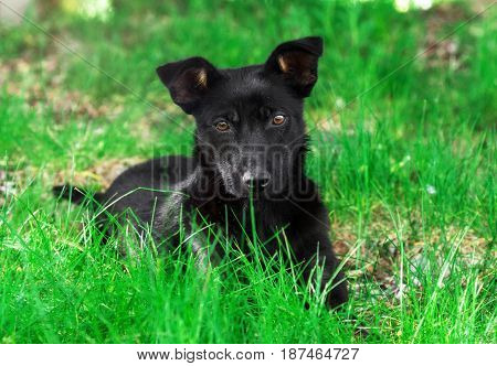 Adorable puppy dog on grass looks directly at the camera.