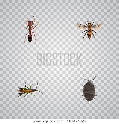 Realistic Emmet, Dor, Wisp And Other Vector Elements. Set Of Animal Realistic Symbols Also Includes Ant, Wasp, Beetle Objects.