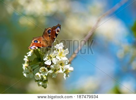 Closeup Photo Of A Butterfly On Flower