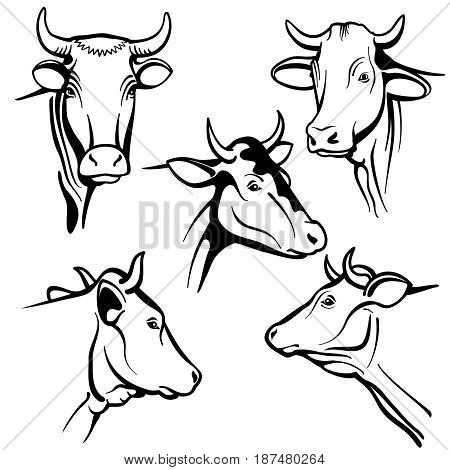 Isolated cow head vector portraits, cattle faces for farm natural dairy products packing. Cow animal head, illustration of black cattle cow