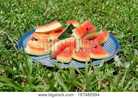 watermelon rind on blue dish with grass. summer concept