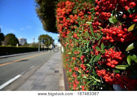 A sunny blue sky and a red fruit scene beside the road
