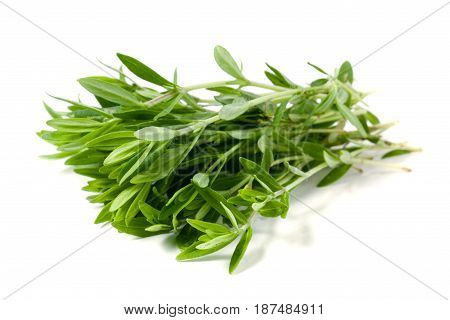 Thyme fresh herb isolated on white background.