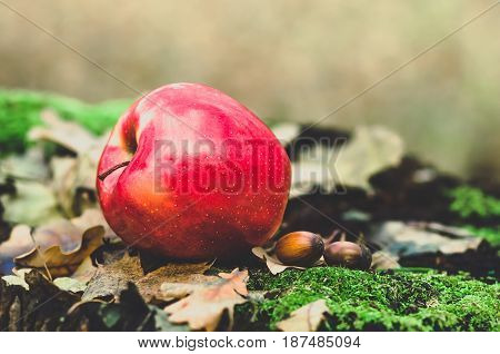 red apple lying on an old stump with green moss, dry autumn leaves and acorns, agriculture background