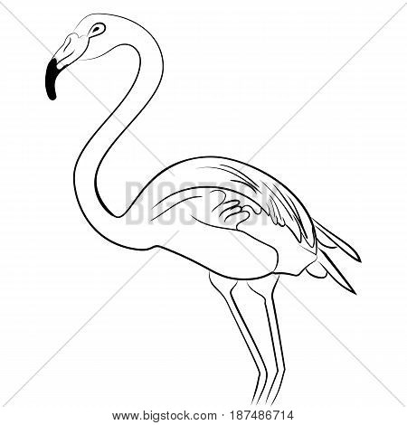 Flamingo bird black white sketch isolated illustration vector
