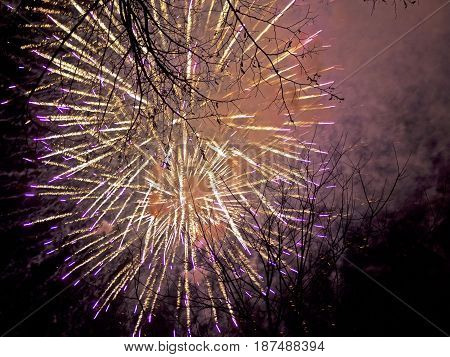 A bright explosion of fireworks amongst the treetops.