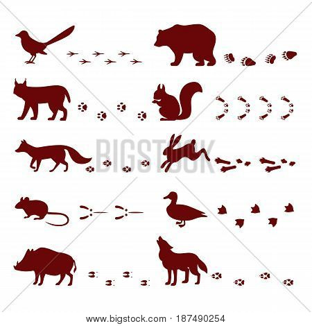 Traces of animals foot steps set contour silhouette footprint wild nature mascot vector illustration. Abstract hunting toe pattern graphic mammal set.
