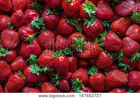 Strawberry. Red strawberry. Fresh harvested strawberries in different positions.