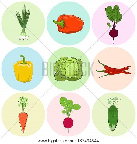 Round Colored Icons Vegetables, Fresh Cucumber, Green Onion and Beetroot, Orange and Yellow Sweet Pepper, Icons Radish and Hot Chile Pepper, Carrot with White Cabbage, Vector Illustration