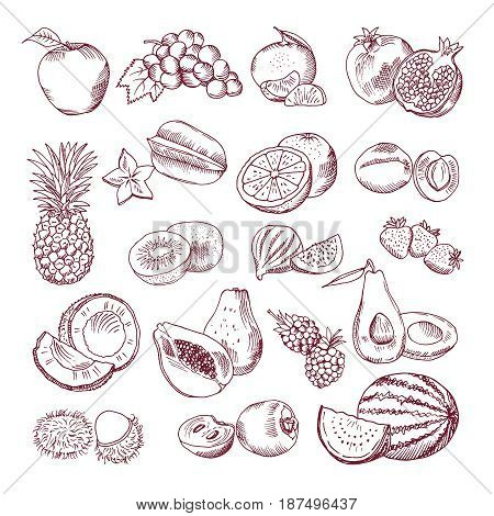 Fresh and juicy fruits. Vector hand drawn illustration isolate on white background. Doodle pictures set. Juicy fruits, fresh vegetarian organic food