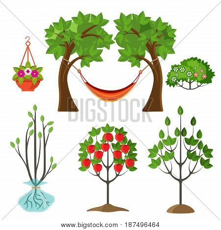 Set of summer plants in gardening concept. Stages of growth of apple tree, hanging basket with flower, hammock between branches vector illustration