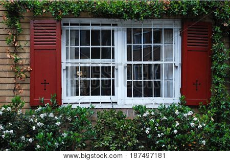 A window with opened shutters on ivy wall. Gratings on the window and plants below