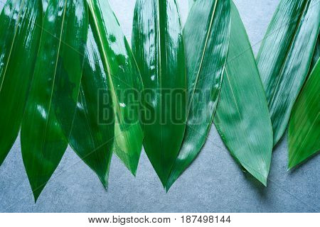 Bamboo wet leaves in a row on gray background