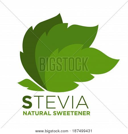 Stevia natural sweetener green leaf with inscription near, logotype design isolated on white. Greenish herbal product stitutes sugar. Healthy herb eating template vector illustration in flat design