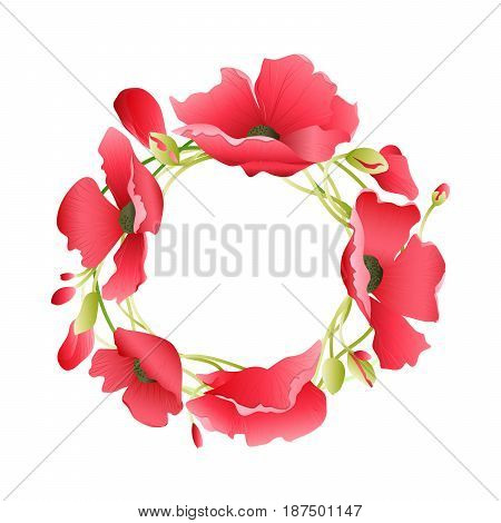Wreath from poppy flowers on white background.