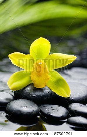 Beautiful yellow orchid with plant and therapy stones