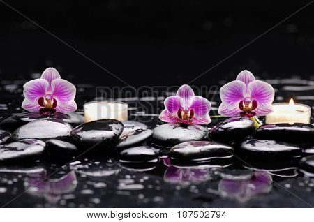 black stones and three orchid ,candle on wet background