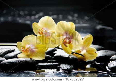 still life with pebbles and yellow orchid