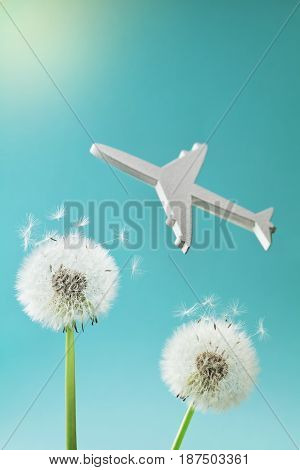 Dandelion flowers and airplane silhouette in blue sky. Travel, summer vacation, aviation and air flight concept.