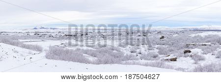 panorama shot of  Winter landscape with snow covered trees at Dimmuborgir Lake Myvatn, Iceland